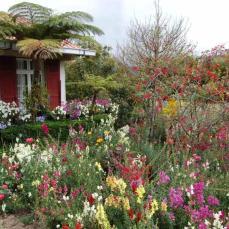 Salazie - jardin - La Réunion (c) Michel