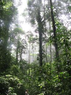 La forêt- Guyane